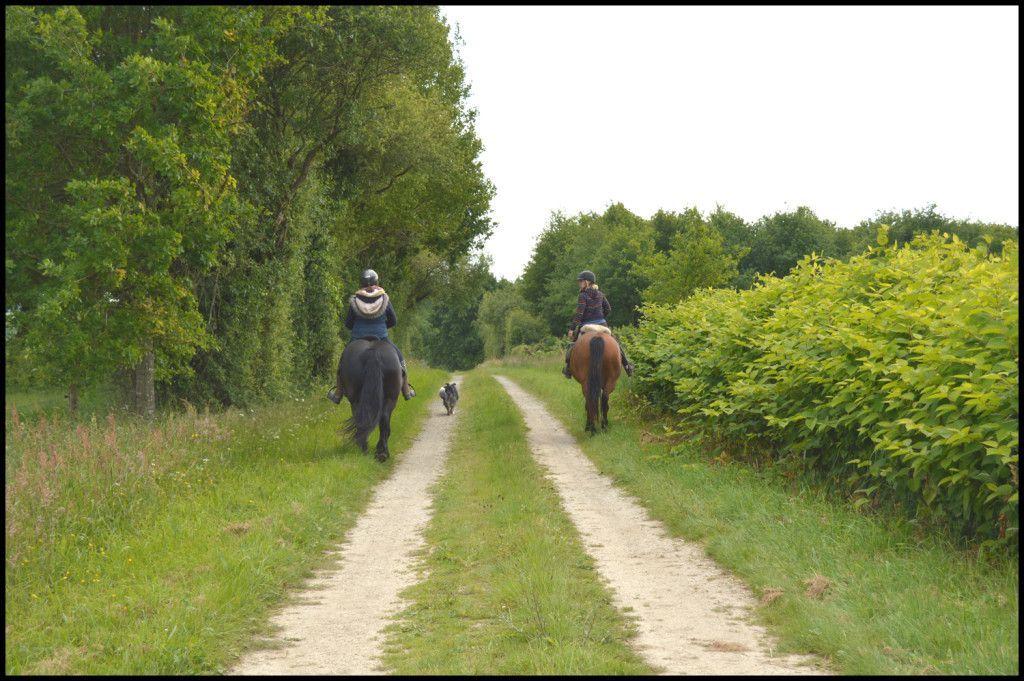 Balade rando à cheval